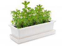 Vypěstuj si bazalku, truhlík bílý 40 cm, Domestico
